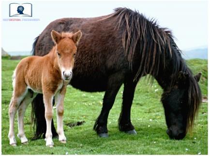 curso de bienestar animal para profesionales
