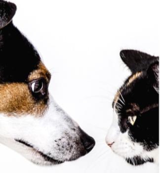 curso de morfología del perro y el gato