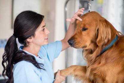 curso de bienestar animal 2